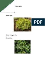 Jardinería - Árboles