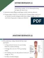 ANATOMI ESOFAGUS (1)