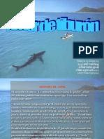 Amor de Tiburon