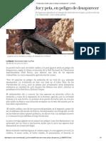 Paraba Azul, Cóndor y Peta, En Peligro de Desaparecer - La Razón