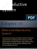Anatomy Reproductive Presentation