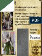 Bunga Markisa (Passiflora)