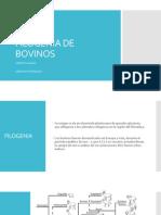 Filogenia de Bovinos