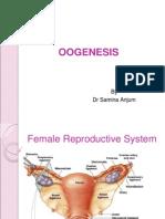 presentasi Oogenesis (biologi SMA XII ipa)