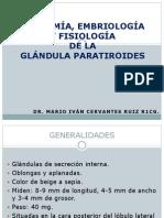 anatomiayembriologiadeparatiroides-130814203805-phpapp02.pptx