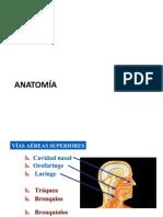 Anatomia Vía Aerea