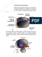 Divisiones Del Tubo Intestinal