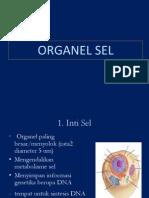 sel-2