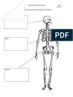 HO28 Fracture Activity Sheet Skeleton Protection