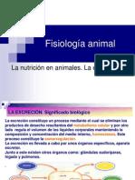 Fisiología-animal--excreción.ppt