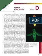 Drosophila Genetic Portrait