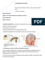 Anatomia Clinica de Craneo y Cuello PDF