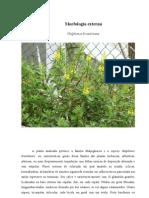 A planta analizada pertence a família Malpighiaceae e a espécie Galphimia brasiliense