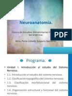 Neuroanatomía Programa