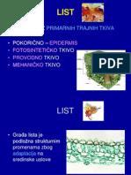 LIST Anatomija