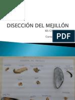 Disección Del Mejillón - Ies Casas Nuevas - 2014