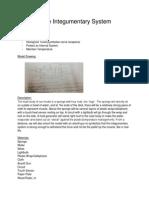 integumentarysystemmodel