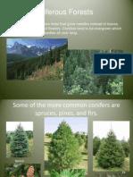 coniferousanddeciduoustreespowerpoint
