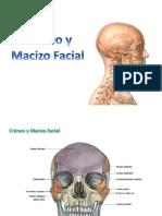 2 - Craneo y Macizo Facial