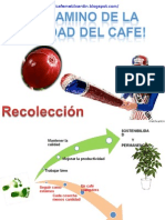Recoleccion-El Camino de La Calidad Del Cafe