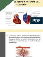 Principales Venas y Arterias Del Corazón