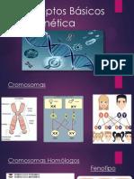Conceptos Básicos   De Genética.pptx