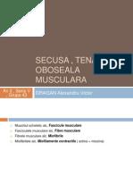 Tetanos , Secusa , Oboseala Musculara
