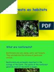 rainforest_powerpoint (2).ppt