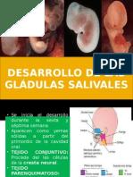 Diapositivas de Embriologia