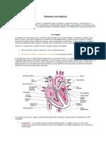 Sistema Casdiovascular