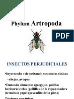 artrópodos 2013