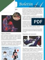 Boletín No.11 - Noviembre 2014