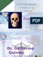 Anatomía Maxilar SUPERIOR