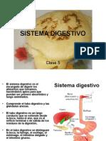 clase 5 sistema digestivo I.ppt