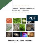 diseocurricularymodelospedagogicos-110319171150-phpapp01