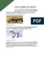 Top 12 Animales en Peligro de Extinción