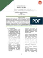 Informe Carbon Activado