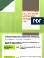 Estructura Del Sistema Nervioso Parasimpatico