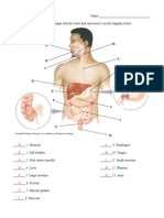 Digestive System Organs Answers