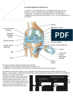 Ortopedia 2 prima lezione