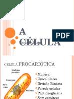 A Célula(aula).ppt
