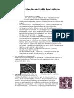Preparación de Un Frotis Bacteriano