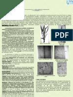 ESTUDIO DE LA ARQUITECTURA FOLIAR DE Nectandra angustifolia (Shard.) Nees & Mart. ex Nees (LAURACEAE), DE LA SELVA MISIONERA, ARGENTINA
