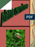 47231891-Plante-Carnivore.ppt