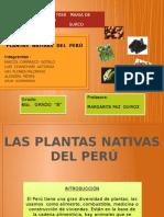 Diapositivas Plantas Nativas Del Perú