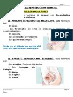 TEMA 2 ADAPTADO.docx