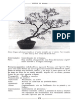 Libro Manual de Bonsai Anne Swinton 176