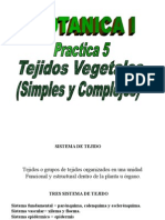 Practica 5 Tejidos Vegetales 2004