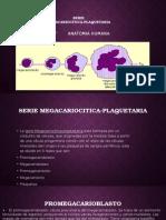 Serie Megacariocitica