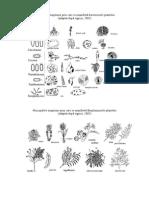 Bacteriozele Plantelor (Lab Fitopatologie)